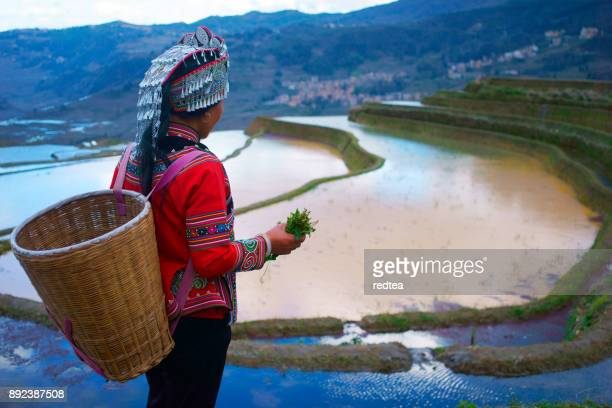 terraced rice fields in yuanyang county, yunnan, china - minority groups stock pictures, royalty-free photos & images