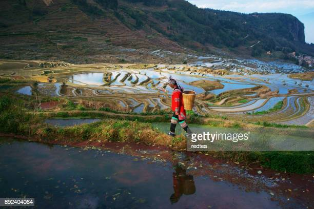terrasvormige rijstvelden in yuanyang county, yunnan, china - rice terrace stockfoto's en -beelden
