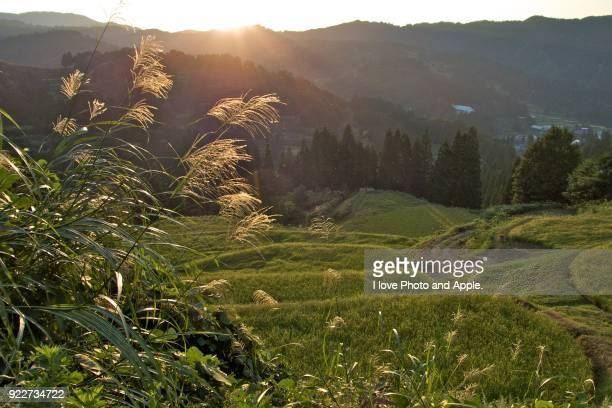 Terraced rice fields landscape
