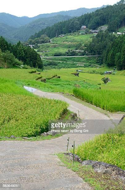 terraced rice fields - 山村 ストックフォトと画像