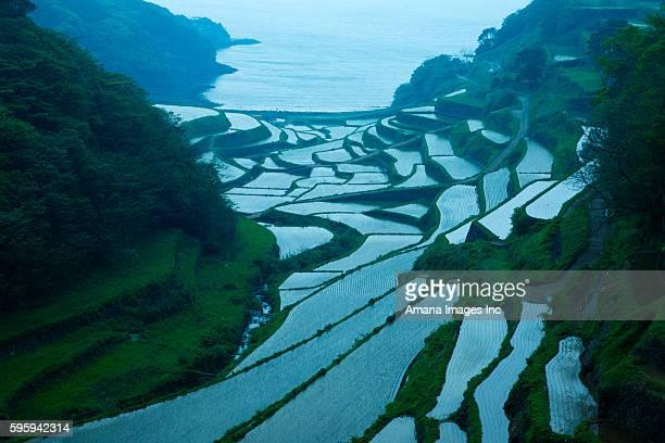 terraced rice fields - 佐賀県 ストックフォトと画像