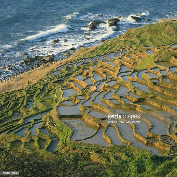 terraced rice fields, senmaida, ishikawa prefecture, japan - hokuriku region stock photos and pictures