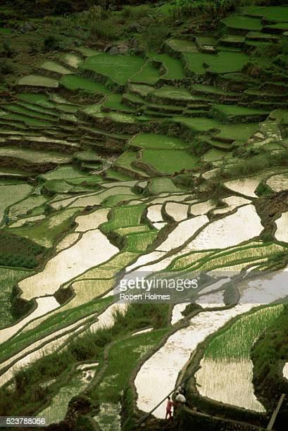 terraced rice paddies - paisajes de filipinas fotografías e imágenes de stock