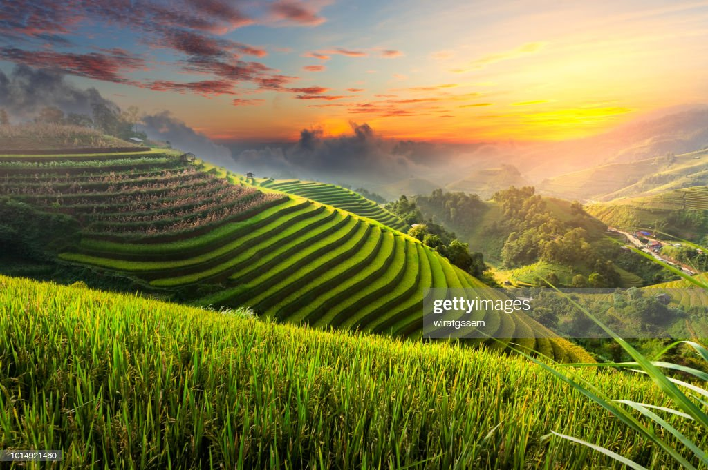 Terraced rice paddy field landscape of northern Vietnam. : Stock Photo
