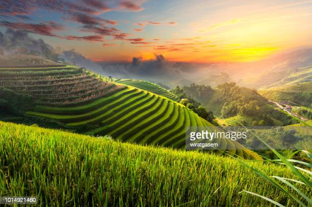 terraced rice paddy field landscape of northern vietnam. - rice terrace stockfoto's en -beelden