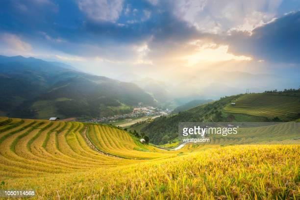 Terraced rice paddy field landscape of northern Vietnam.