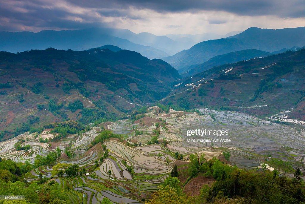 Terraced rice paddy fields, Yuanyang, China : Stock Photo