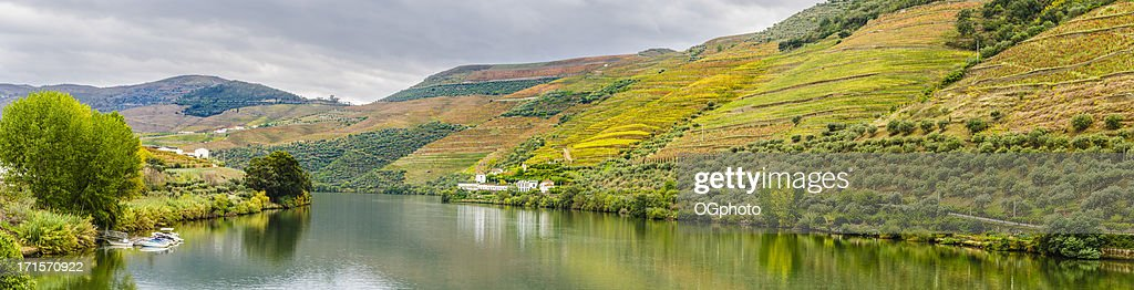 Terraced vineyards and olive groves along the Douro River. : Stock Photo