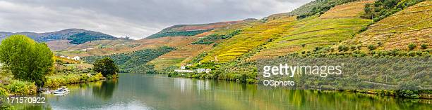 Terraced vineyards and olive groves along the Douro River.