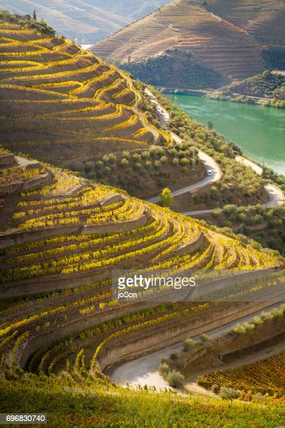 Terraced vineyards and river in Douro Valley, Portugal