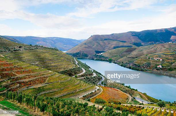 Terraced vineyards in autumn