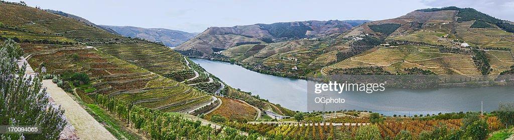 Terraced vineyards in autumn : Stock Photo