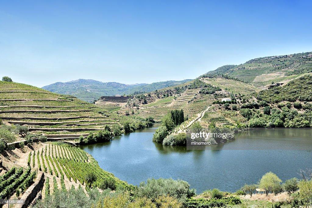 Terraced vineyards in Douro Valley : Stock Photo