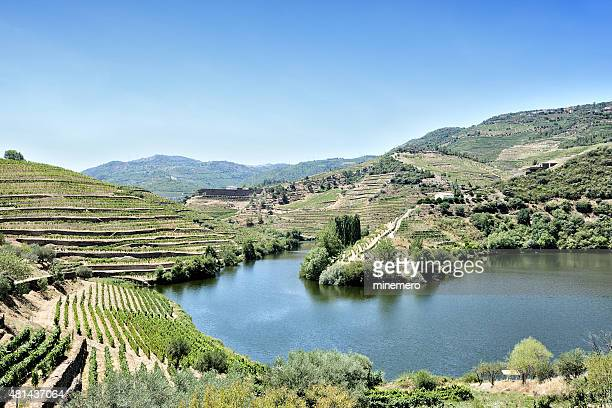 Terraced vineyards in Douro Valley