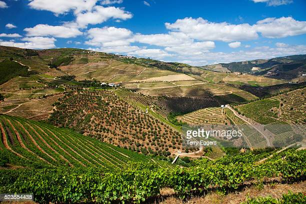Terraced Vineyards lining the hills of the Duoro Valley