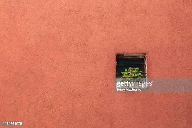 terracotta coloured stucco exterior house wall with green succulent plant on windowsill, burano island, venetian lagoon, venice, veneto, italy - terracotta stock pictures, royalty-free photos & images