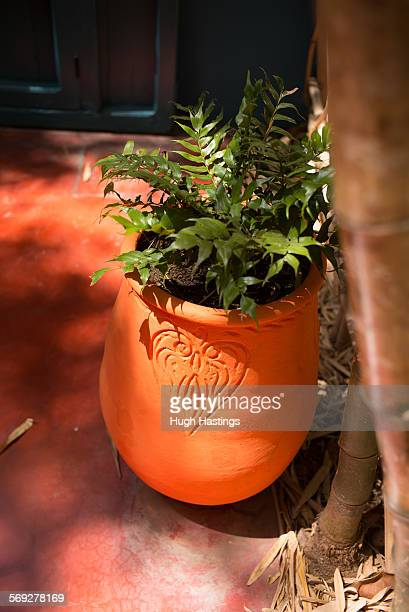 terracotta flower pot - hugh hastings stock pictures, royalty-free photos & images