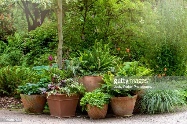 terracotta pots planted with ferns and grasses forming a garden feature - plant pot stock pictures, royalty-free photos & images