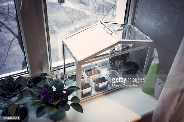 Terrarium plants growing in window