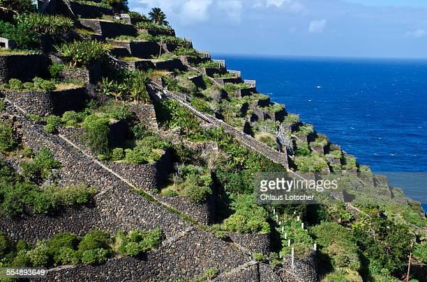 Terrasses of old Banana plantation. La Gomera