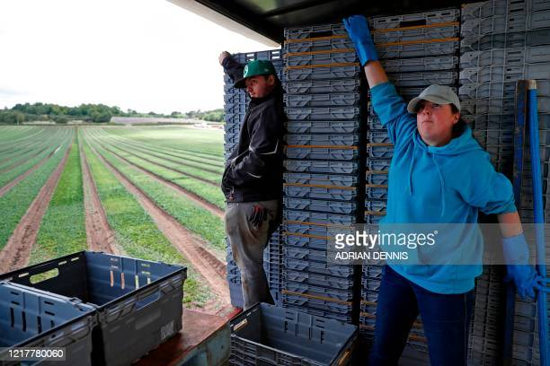 Terri Eaton and Dan Racvenhill part of the UK Seasonal Relief Team working for The Watercress Company hold onto crates full of spinach as the tractor...