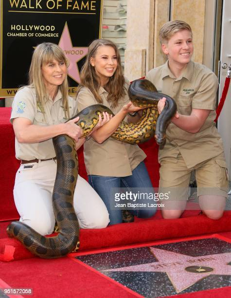 Terri Irwin, Bindi Irwin and Chandler Powell attend a ceremony honoring Steve Irwin with star on The Hollywood Walk of Fame on April 26, 2018 in Los...