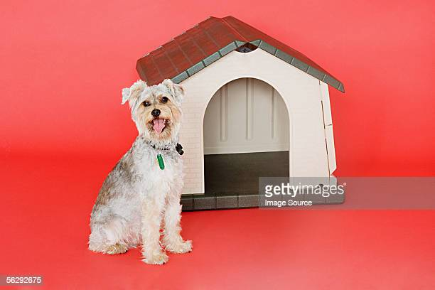 Terrier and kennel