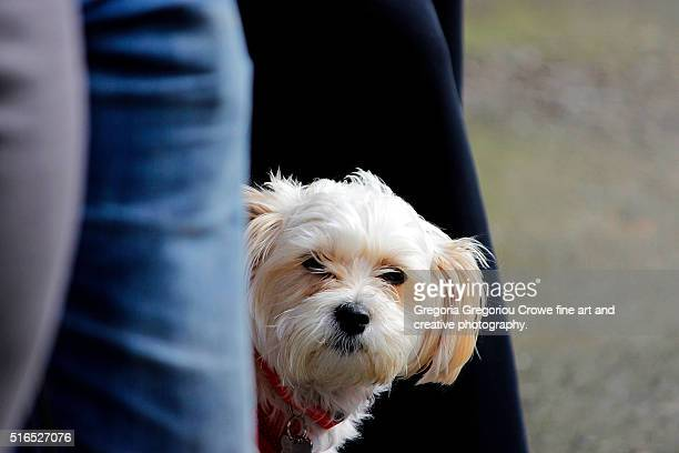 terrier dog - gregoria gregoriou crowe fine art and creative photography. stock pictures, royalty-free photos & images