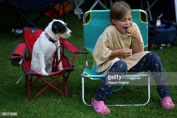 Terrier Honey Bee sits in a beach chair and watches a girl eating pistachios during the Butch Cassidy Cup 2009 the German dog frisbee German...