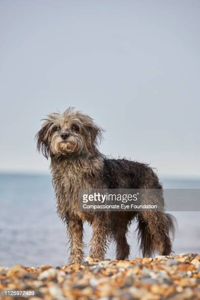 Terrier standing on beach
