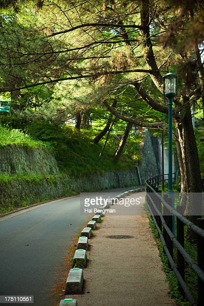 Terumo Road