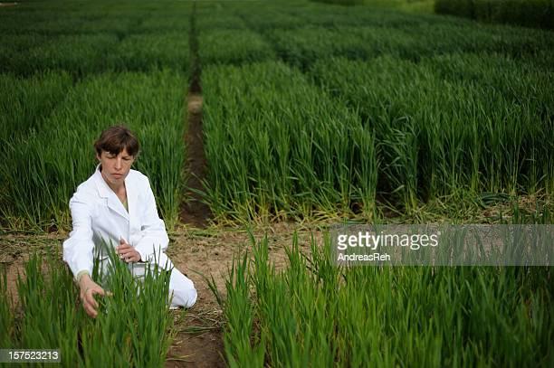 Test field area of plant breeding