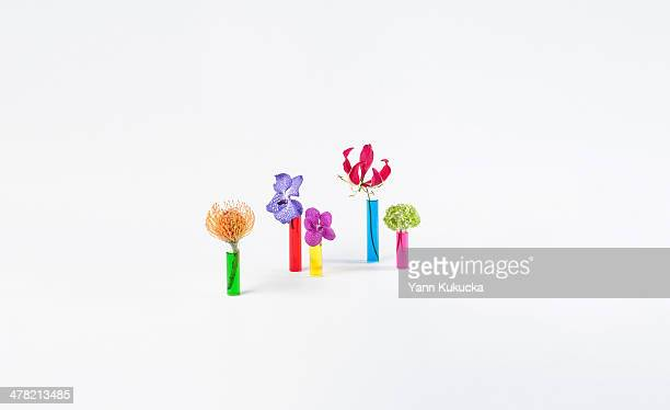 Test tubes and flowers