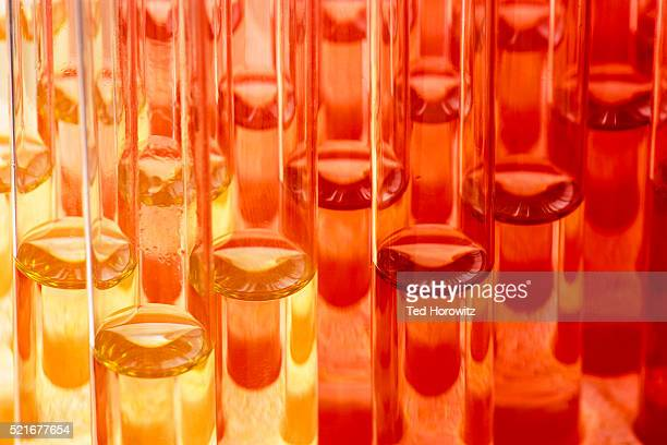 test tubes - scientificsubjects stock pictures, royalty-free photos & images
