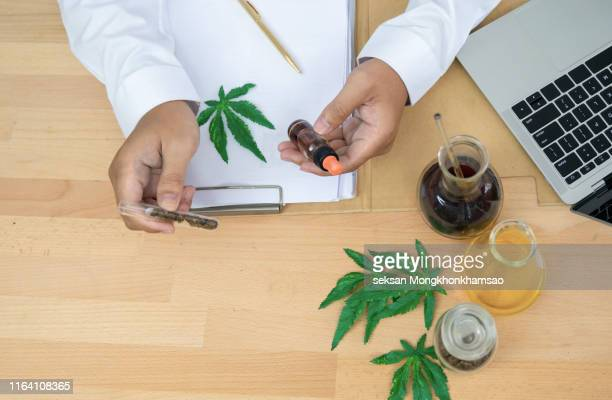 testing cannabis buds for the extraction of medicinal oil - cannabinoid stock pictures, royalty-free photos & images