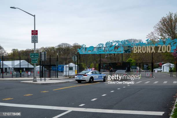 COVID19 testing site is seen in a parking lot at the Bronx Zoo on April 23 2020 in New York City Seven more big cats have reportedly tested positive...