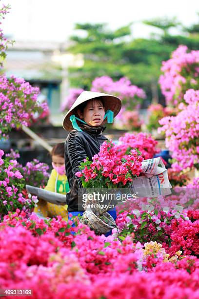 Tet - Vietnamese Lunar New Year- is the biggest holiday in Vietnam. Usually, a lot of gardeners from Mekong Delta will drive their boat with hundred...