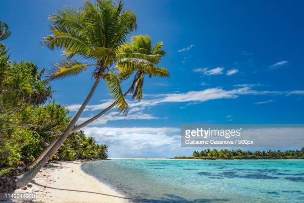 tetiaroa island - jamaica stock pictures, royalty-free photos & images