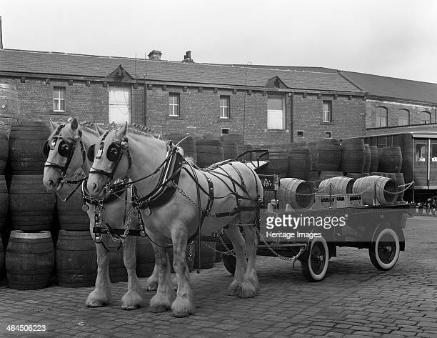 Tetley shire horses and dray Joshua Tetley Brewery Leeds West Yorkshire 1966 The world famous shire horses gave service to the company for 184 years...