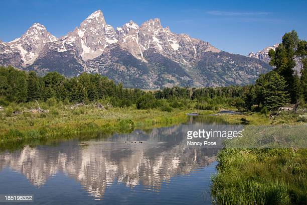 teton reflections - nancy green stock pictures, royalty-free photos & images