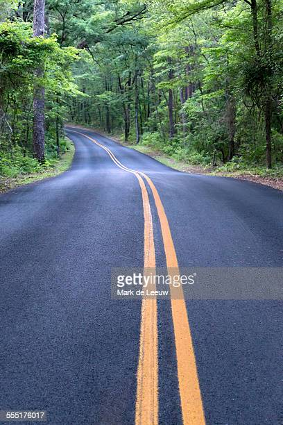 USA, Texas, Caddo Lake State Park, Empty road in forest