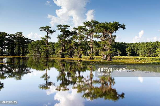 USA, Texas, Caddo Lake State Park