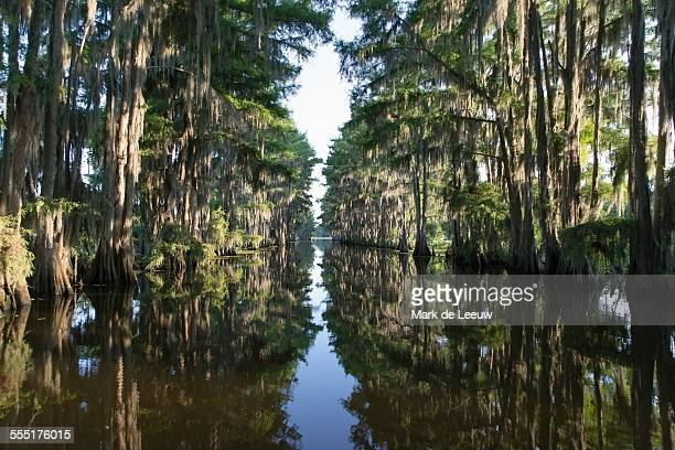 USA, Texas, Caddo Lake State Park, Scenic view of lake