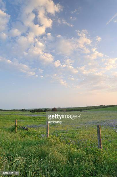 texas countryside - texas stock pictures, royalty-free photos & images