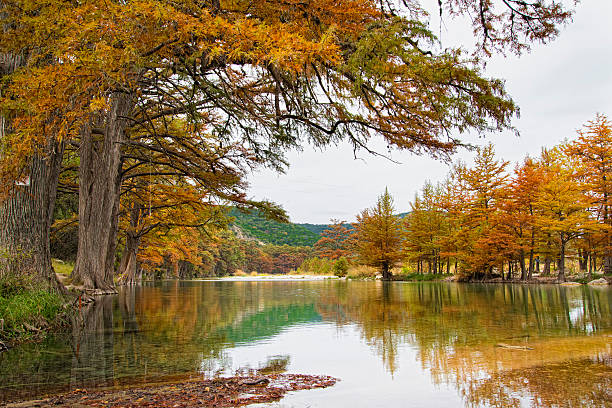 USA, Texas, Cypress Tree With Golden Leaves In Frio River Wall Art