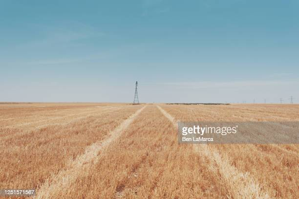 texas field - texas stock pictures, royalty-free photos & images