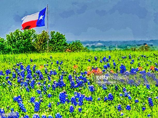 texas flag and bluebonnet field - texas bluebonnet stock pictures, royalty-free photos & images