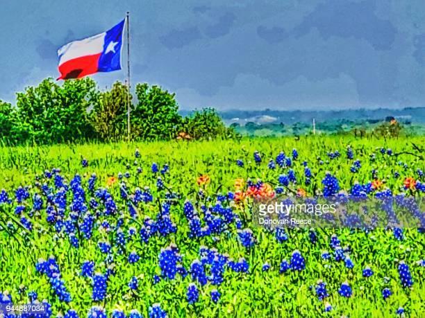 Texas flag and bluebonnet field