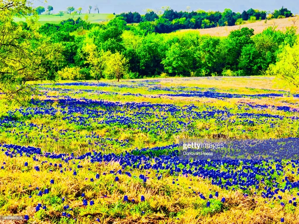 Texas Hill Country Landscape : Stock Photo