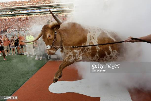 Texas Longhorns mascot BEVO leads the team out of the tunnel before the game against the Tulsa Golden Hurricane at Darrell K Royal-Texas Memorial...